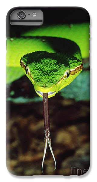 Temple Viper IPhone 7 Plus Case by Gregory G. Dimijian