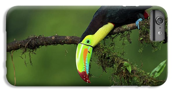 Toucan iPhone 7 Plus Case - The Colors Of Costa Rica by Fabio Ferretto