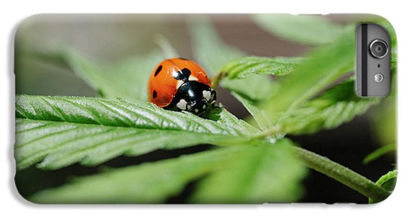 Ladybug iPhone 7 Plus Case - The Ladybug And The Cannabis Plant by Stock Pot Images