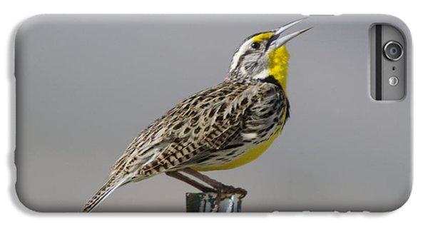 Meadowlark iPhone 7 Plus Case - The Meadowlark Sings  by Jeff Swan