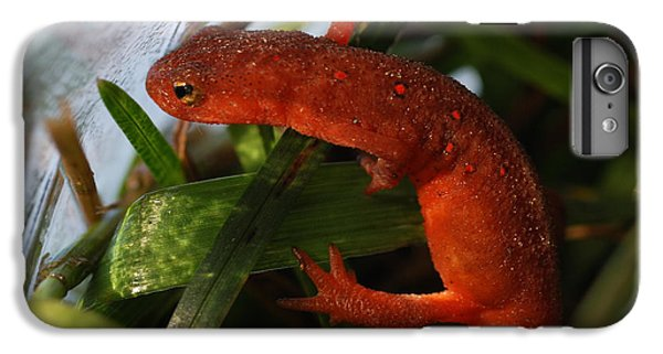 Newts iPhone 7 Plus Case - Travels Of A Newt by Susan Capuano