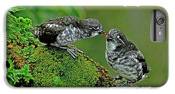 Auklets iPhone 7 Plus Case - Usa, Alaska, Pribilof Islands, St by Jaynes Gallery