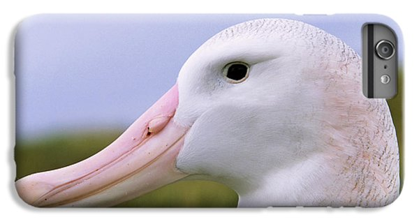 Wandering Albatross (diomendea Exulans IPhone 7 Plus Case by Martin Zwick