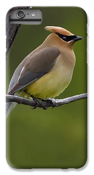 Cedar Waxing iPhone 7 Plus Case - Wax On by Tony Beck