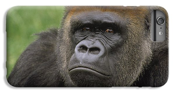 Western Lowland Gorilla Silverback IPhone 7 Plus Case by Gerry Ellis
