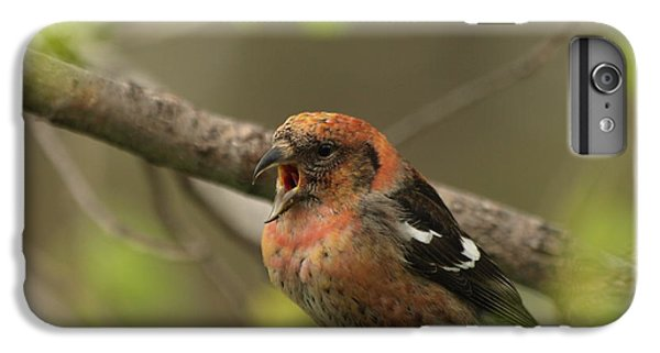 Crossbill iPhone 7 Plus Case - White-winged Crossbill by James Peterson