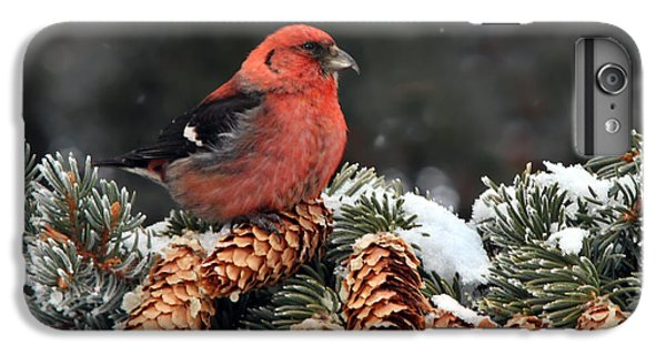 White-winged Crossbill IPhone 7 Plus Case by Nick  Saunders