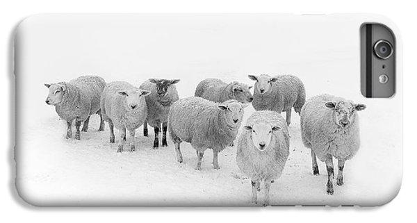 Rural Scenes iPhone 7 Plus Case - Winter Woollies by Janet Burdon