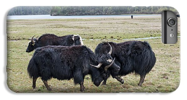 Yaks Fighting In Potatso National Park IPhone 7 Plus Case by Tony Camacho