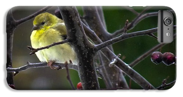 Finch iPhone 7 Plus Case - Yellow Finch by Karen Wiles