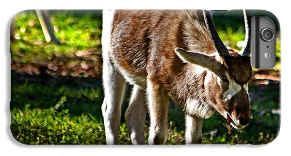 Youngster Addax IPhone 7 Plus Case