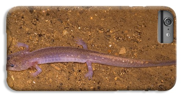 Ozark Blind Cave Salamander IPhone 7 Plus Case by Dante Fenolio