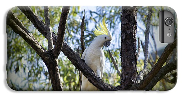 Sulphur Crested Cockatoo IPhone 7 Plus Case by Douglas Barnard