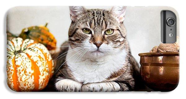 Cat And Pumpkins IPhone 7 Plus Case by Nailia Schwarz