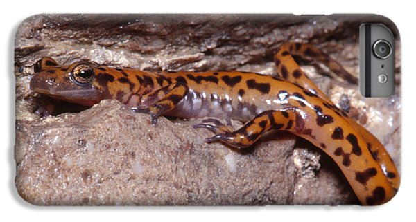 Cave Salamander IPhone 7 Plus Case by Dante Fenolio