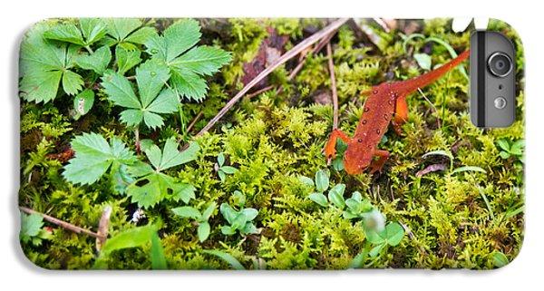 Newts iPhone 7 Plus Case - Eastern Newt Juvenile 4 by Douglas Barnett