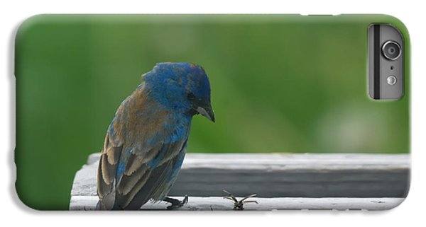 Bunting iPhone 7 Plus Case - Indigo Bunting And Friend by Susan Capuano