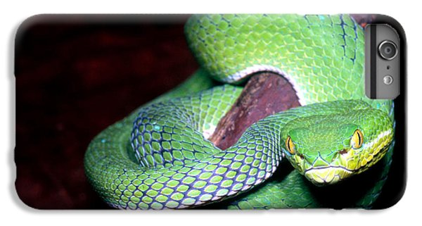 Island Pit Viper IPhone 7 Plus Case by Dante Fenolio
