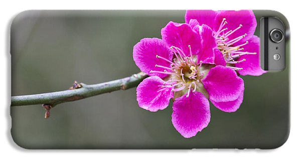 IPhone 7 Plus Case featuring the photograph Japanese Flowering Apricot. by Clare Bambers