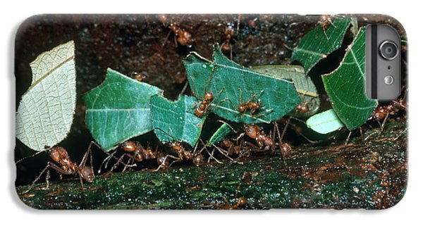 Leafcutter Ants IPhone 7 Plus Case by Gregory G. Dimijian