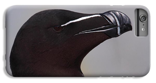 Razorbill Portrait IPhone 7 Plus Case by Bruce J Robinson