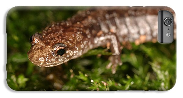 Red-backed Salamander IPhone 7 Plus Case by Ted Kinsman