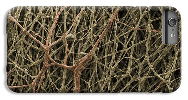 Sem Of Mycelium On Mushrooms IPhone 7 Plus Case by Ted Kinsman