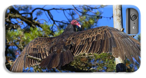 Turkey Vulture With Wings Spread IPhone 7 Plus Case