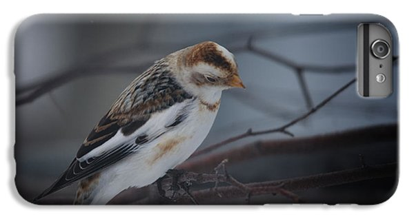 Bunting iPhone 7 Plus Case - Visiter From The North Country by Susan Capuano