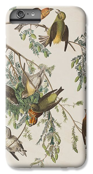 Crossbill iPhone 7 Plus Case - American Crossbill by John James Audubon