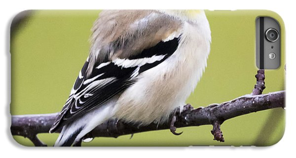 American Goldfinch IPhone 7 Plus Case