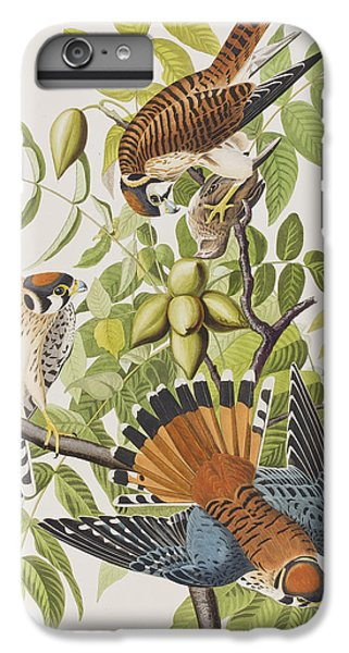 American Sparrow Hawk IPhone 7 Plus Case