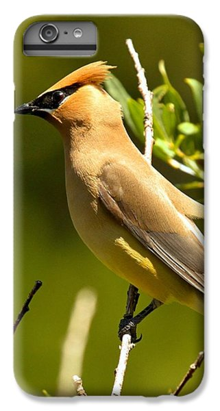 Cedar Waxing iPhone 7 Plus Case - Cedar Waxwing Closeup by Adam Jewell
