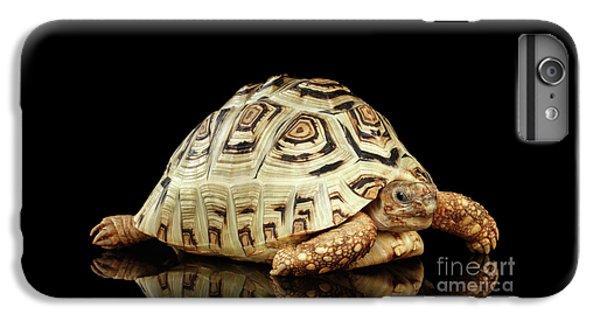Closeup Leopard Tortoise Albino,stigmochelys Pardalis Turtle With White Shell On Isolated Black Back IPhone 7 Plus Case by Sergey Taran