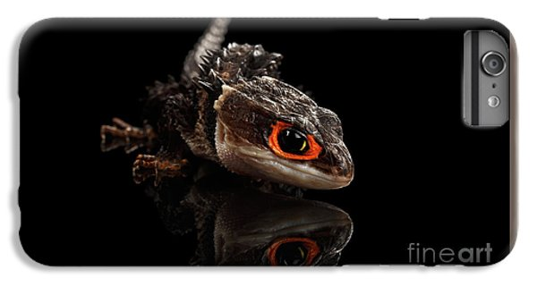 Closeup Red-eyed Crocodile Skink, Tribolonotus Gracilis, Isolated On Black Background IPhone 7 Plus Case by Sergey Taran
