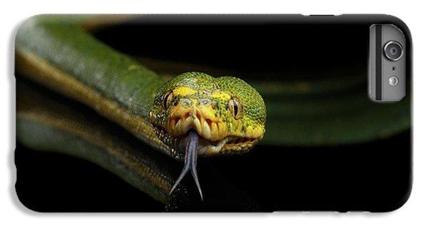 Python iPhone 7 Plus Case - Green Tree Python. Morelia Viridis. Isolated Black Background by Sergey Taran