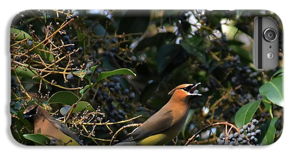 Cedar Waxing iPhone 7 Plus Case - Love Those Berries by Skip Willits