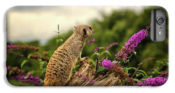 Meerkat iPhone 7 Plus Case - Meerkat Lookout by Martin Newman