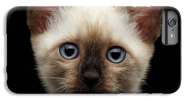 Cat iPhone 7 Plus Case - Mekong Bobtail Kitty With Blue Eyes On Isolated Black Background by Sergey Taran