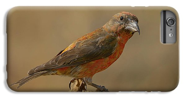 Crossbill iPhone 7 Plus Case - Red Crossbill by Doug Herr