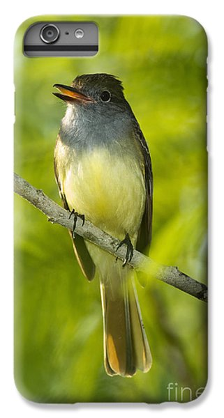 Great Crested Flycatcher IPhone 7 Plus Case by Anthony Mercieca