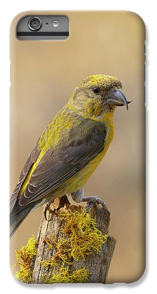 Red Crossbill IPhone 7 Plus Case
