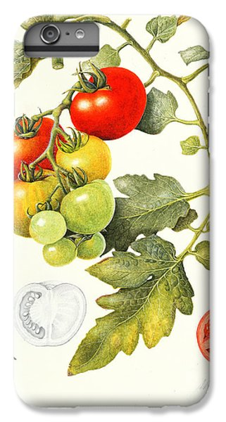 Tomatoes IPhone 7 Plus Case by Margaret Ann Eden