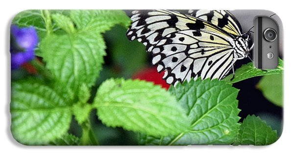 Paper Kite Butterfly No. 3 IPhone 7 Plus Case by Sandy Taylor