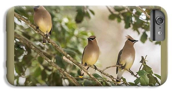 Cedar Waxing iPhone 7 Plus Case - 3 Cedar Waxwings  by Terry DeLuco
