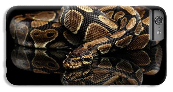 Ball Or Royal Python Snake On Isolated Black Background IPhone 7 Plus Case by Sergey Taran