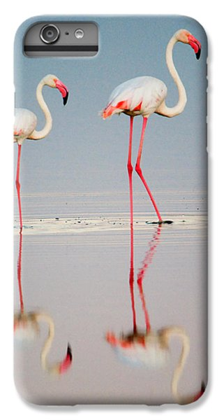 Greater Flamingos Phoenicopterus Roseus IPhone 7 Plus Case by Panoramic Images