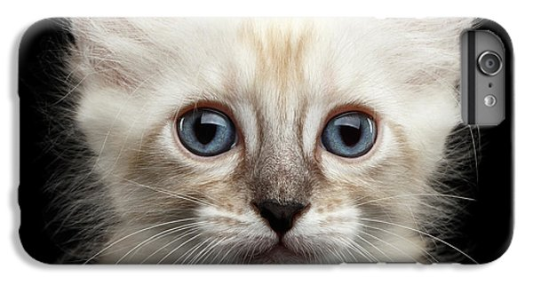 Cat iPhone 7 Plus Case - Cute American Curl Kitten With Twisted Ears Isolated Black Background by Sergey Taran