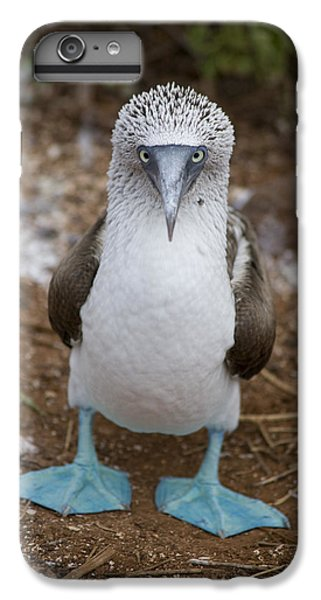 A Blue Footed Booby Looks At The Camera IPhone 7 Plus Case