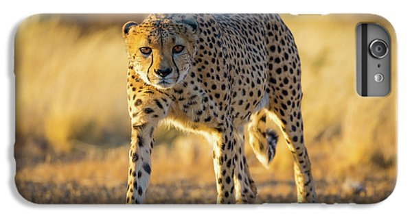 African Cheetah IPhone 7 Plus Case by Inge Johnsson